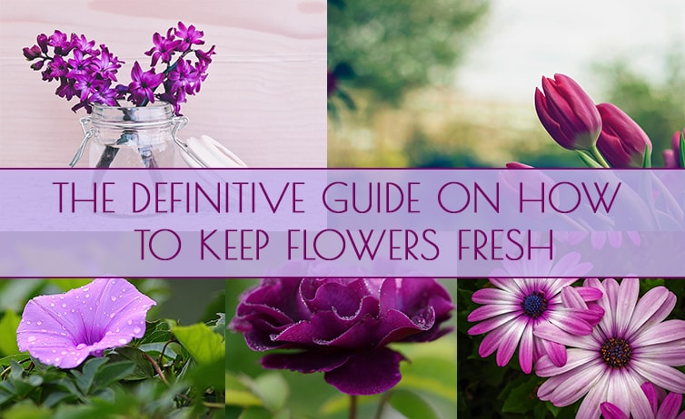 Flower Care 101 – The Definitive Guide on How to Keep Flowers Fresh