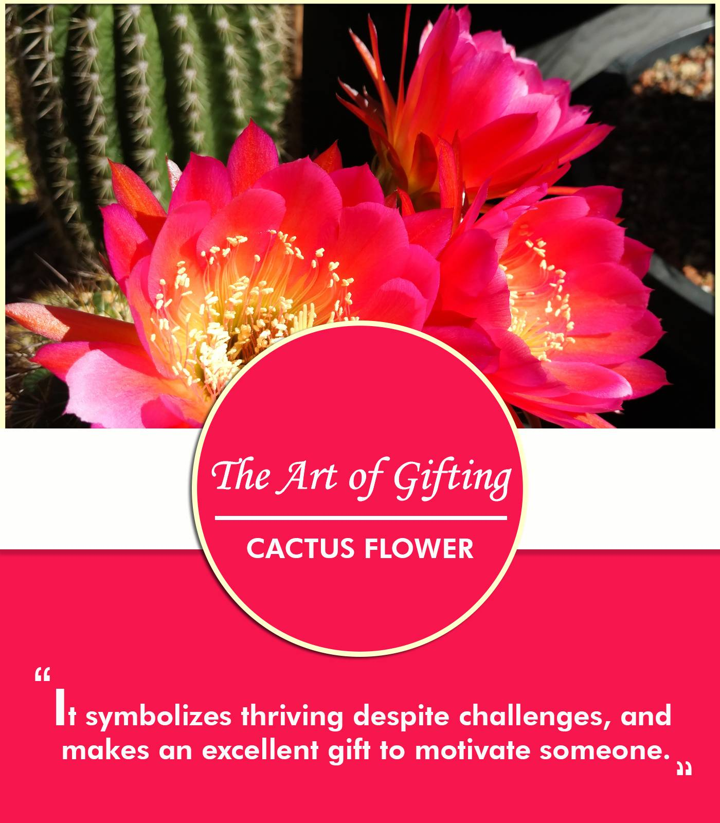 Symbolic Meanings of Flowers in the Art of Gifting