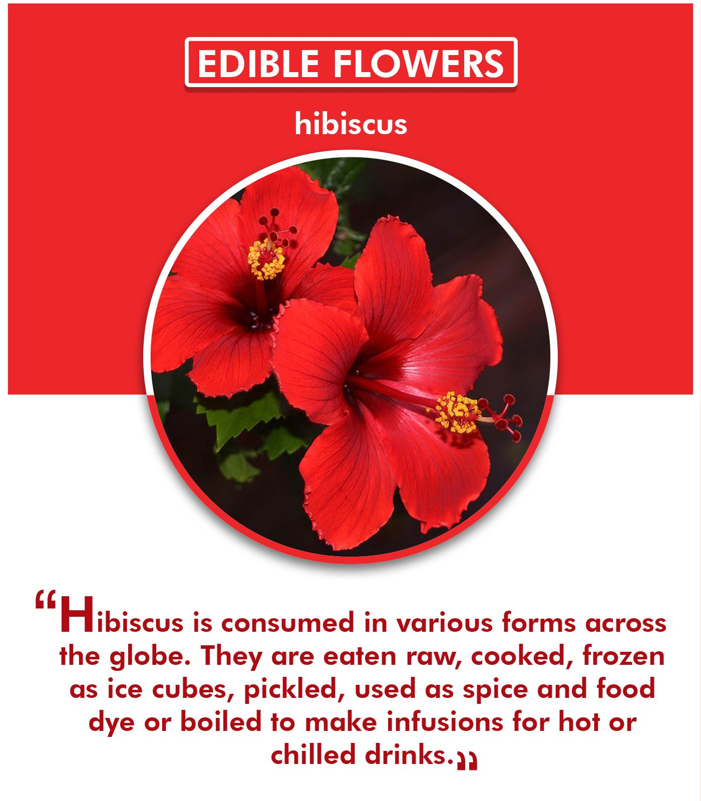 5 Edible Flowers That Can Make Exotic Food Ingridients
