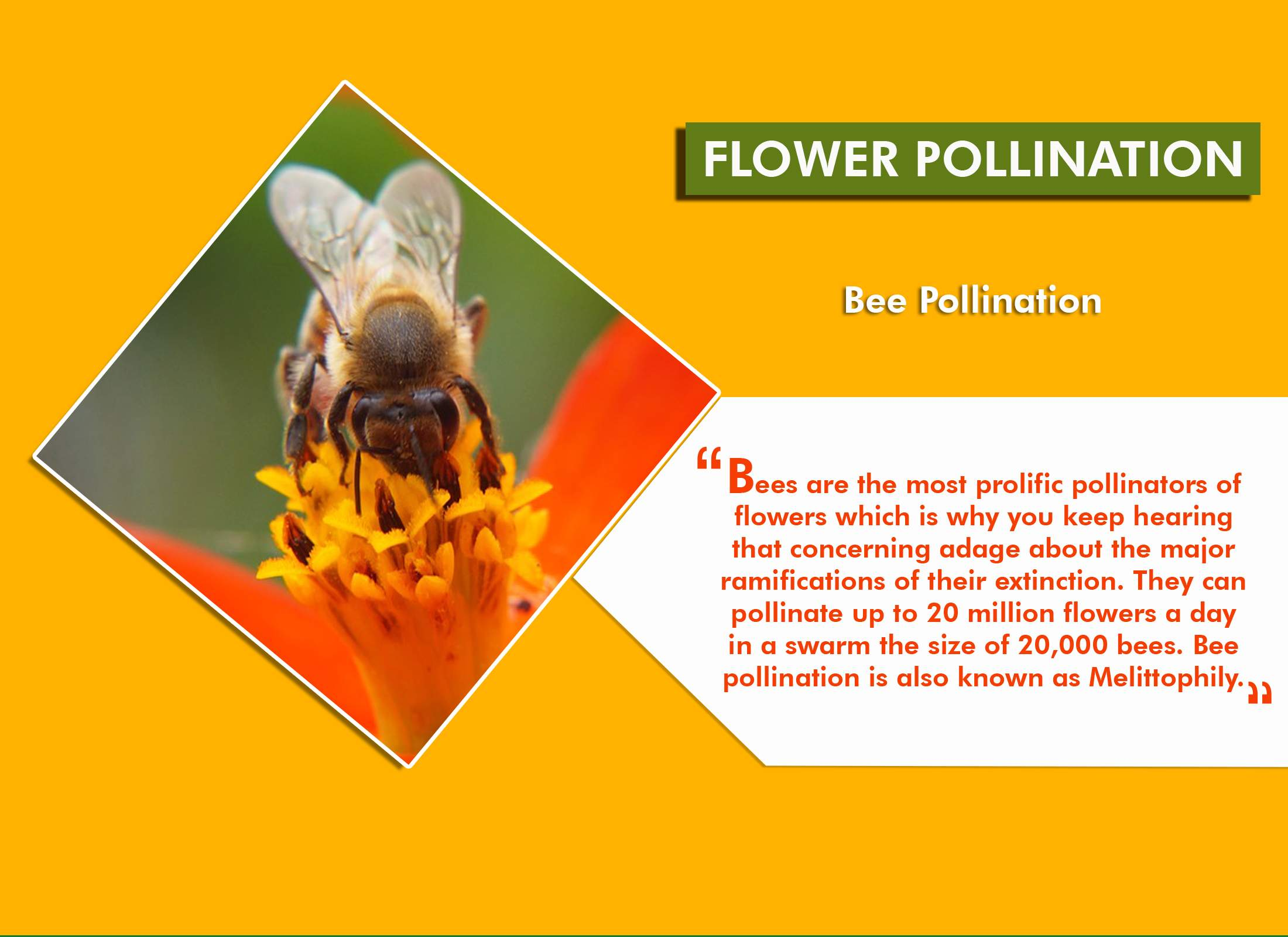 10 Animals That Help in Flower Pollination
