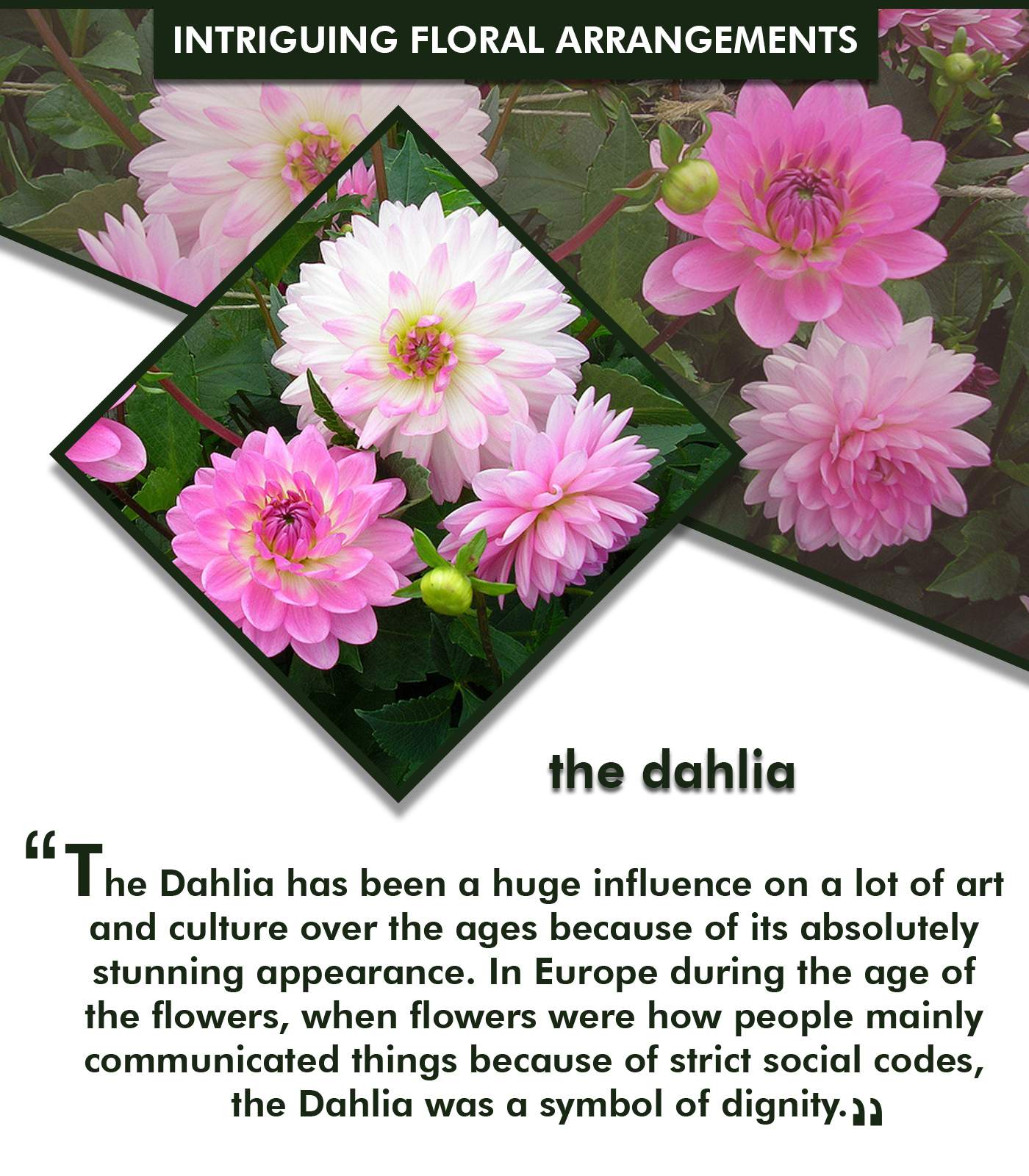 6 intriguing floral arrangements that will leave you spellbound 1 the dahlia izmirmasajfo