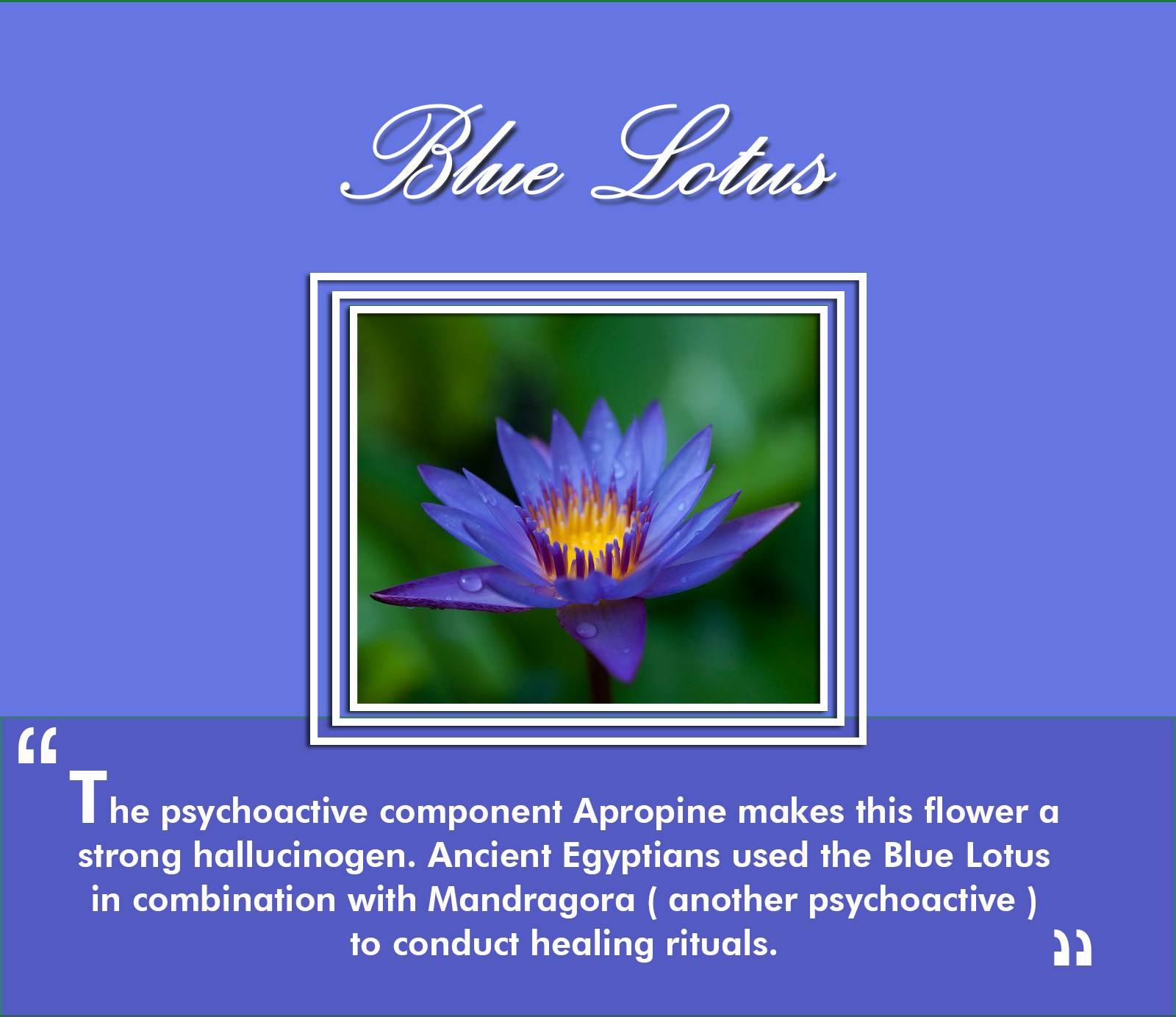 7 Mind Altering Flowers That You Did Not Know About