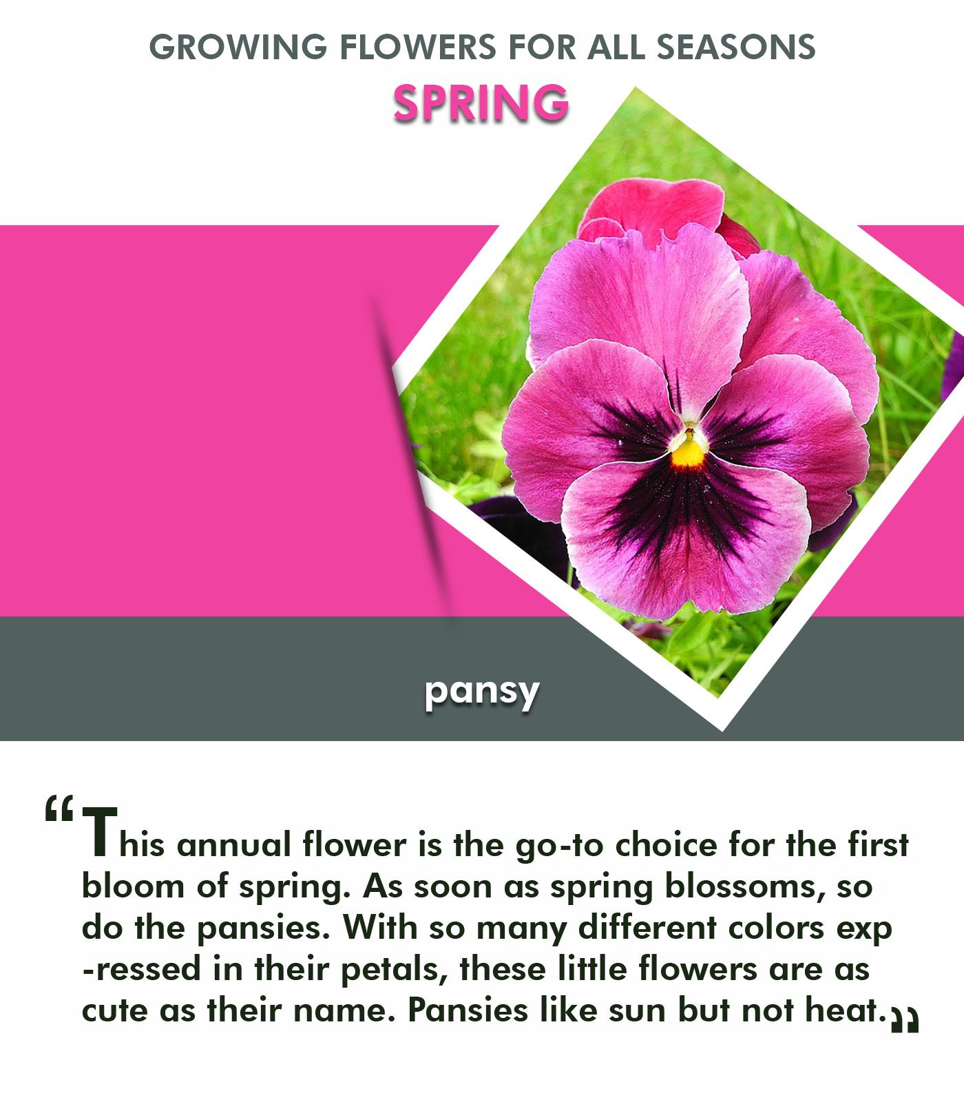 Tips for Selecting and Growing Flowers for all Seasons