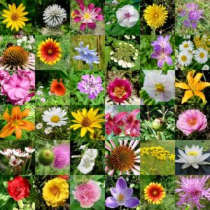 How do flowers brighten up your skin naturally?