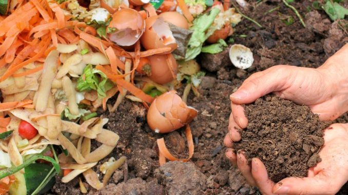 Backyard composting- An ultimate guide